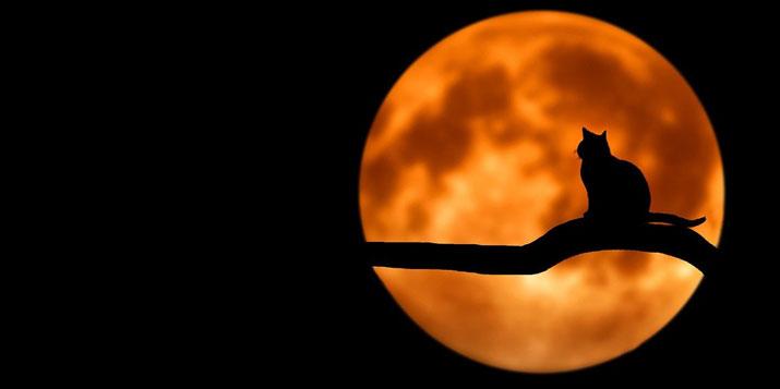 La luna en cada signo del zodiaco, su influencia - Elhoroscopodehoy.eu